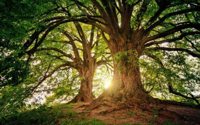 Creating a Prayer Tree